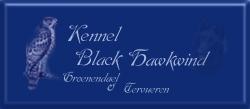 Black Haskwind (N)