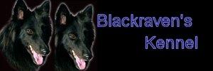 Kennel Black Raven's (S)
