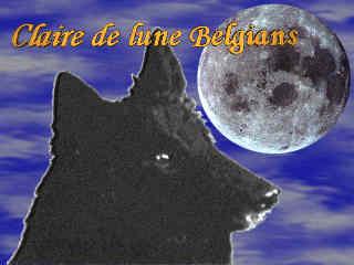 Claire de Lune Belgians (USA)