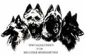 Daenischer Klub fuer belgische Schaeferhunde