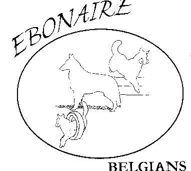 Ebonaire Belgians (USA)