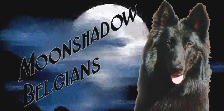 Moonshadow Belgians (AU)
