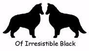 of irresistible Black (NL)